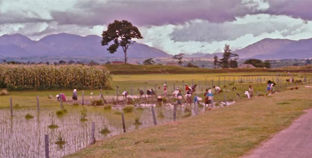 Kathmandu - Bhaktapur road, in late '70s.